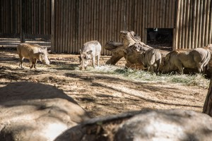 001_zoo_animal_barcelona_location_bsm