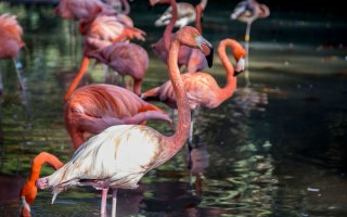 000_zoo_animal_barcelona_location_bsm